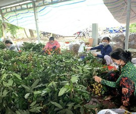 Đồng Tháp đề xuất thu mua tạm trữ nông sản