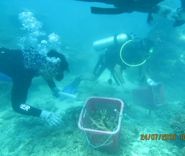 Bà Rịa-Vũng Tàu: Phục hồi thành công san hô khu Ramsar Côn Đảo