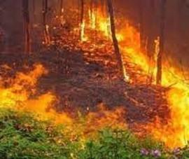 Truy tố người làm cháy 47 ha rừng bạch đàn
