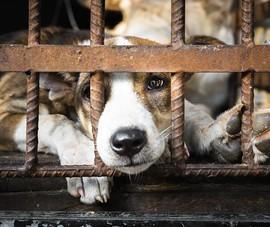 Hơn một triệu chữ ký muốn chấm dứt nạn buôn bán thịt chó mèo