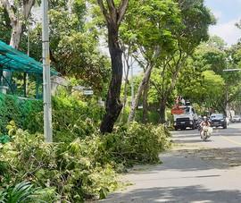 TP.HCM: Tăng cường bảo vệ và phát triển cây xanh