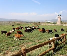 Trang trại bò sữa Vinamilk tăng trưởng mạnh và ấn tượng
