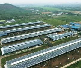 Vinamilk: 12 trang trại bò sữa sẽ sử dụng năng lượng mặt trời