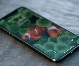 iPhone 12 sẽ có cảm biến 64 MP, màn hình 120 Hz?