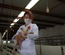 Huawei chuyển sang phát triển công nghệ hỗ trợ chăn nuôi heo?