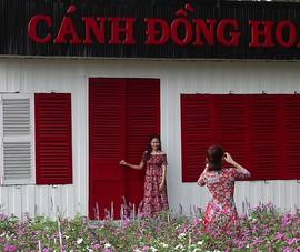 Video: Cánh đồng hoa bên sông Sài Gòn hút khách ngày đầu năm