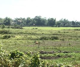 Video: Hơn 300 ha đất nông nghiệp ở Đà Nẵng không thể canh tác