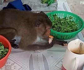 Khỉ đực giật hột vịt lộn, gà quay… sau chợ Lò Than