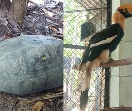 Tiếp nhận, cứu hộ chim hồng hoàng, khỉ mặt đỏ... trong mùa dịch