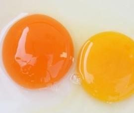 Lòng đỏ trứng màu đậm và nhạt, ăn cái nào tốt hơn?