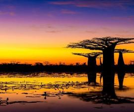 Những cảnh vật thiên nhiên lạ mắt chỉ có ở Madagascar