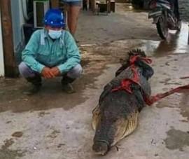 Công nhân Trung Quốc đối mặt 5 năm tù vì giết và ăn thịt cá sấu ở Indonesia