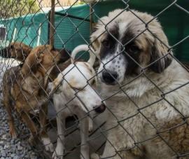 Chính quyền Mỹ bị lên án vì bỏ rơi lượng lớn chó nghiệp vụ tại sân bay Kabul