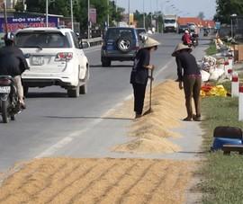 Người Quảng Bình đau xót nhìn hạt thóc nảy mầm