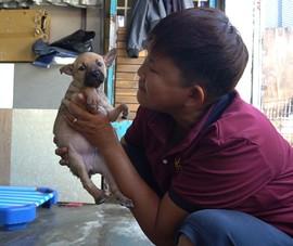'Người mẹ' của hơn 100 chú chó, mèo khuyết tật