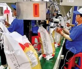 Trung Quốc, Philippines tăng mua gạo Việt với giá cao