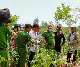 Bình Thuận: Phát hiện nhiều mẩu xương người trong rẫy mì