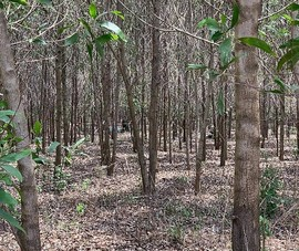 Tìm thân nhân người chết bất thường trong rừng tràm ở Bình Thuận