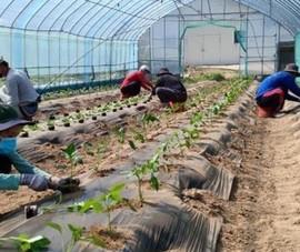 Hàn Quốc cho phép lao động hết hạn hợp đồng làm việc thời vụ