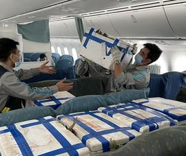 100 tấn vải thiều 'ngồi' khoang khách máy bay Boeing vào TP.HCM