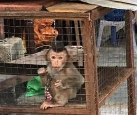 TP.HCM chỉ đạo tăng cường quản lý động vật hoang dã