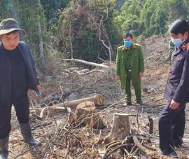 Triệu tập 2 người liên quan vụ phá rừng phòng hộ ở Đà Lạt