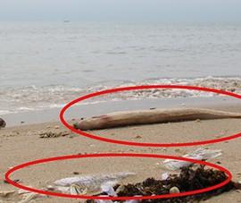 Viện Hải dương học Nha Trang tham gia tìm nguyên nhân cá chết