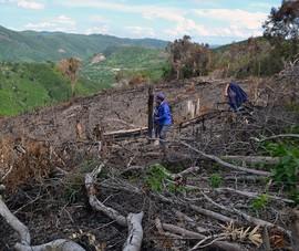 Kỷ luật 6 lãnh đạo của một xã vì để xảy ra phá rừng