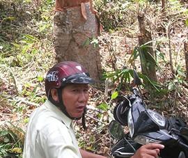 Khởi tố 1 cựu phó giám đốc ban quản lý rừng phòng hộ