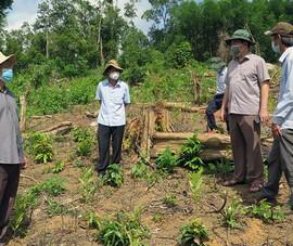 Tỉnh ủy yêu cầu xử lý nghiêm cán bộ liên quan vụ phá rừng ở huyện Sơn Hòa