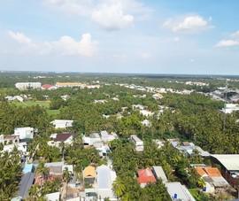 Bến Tre kiến nghị hỗ trợ 72 tỉ khôi phục vườn dừa sau hạn mặn