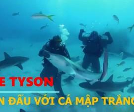 Mike Tyson thử thách đấu với đàn cá mập trắng