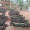 CNN: Nhóm nổi dậy huấn luyện quân sự miễn phí cho dân Myanmar