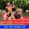 Người đẹp chèo Kayak với cọp hoang dã