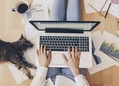 5 cách giúp bạn an toàn hơn khi hội họp trực tuyến tại nhà