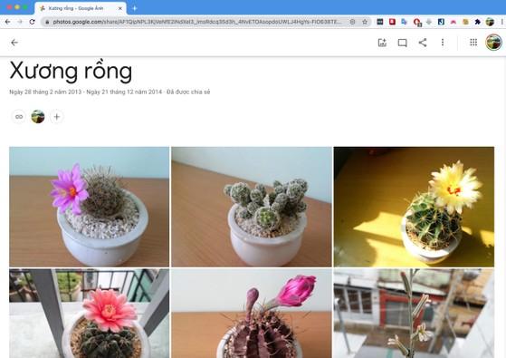 sao-luu-hinh-anh-tren-google-photos,kynguyenso