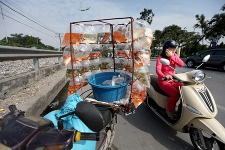 Người phụ nữ đang sử dụng điện thoại trong khi điều khiển xe máy bằng một tay trên đường Lê Duẩn.