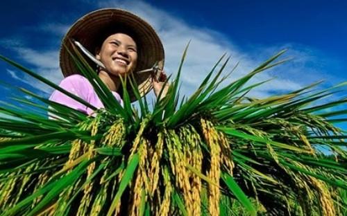 Ngộ ra với tín dụng nông nghiệp nông thôn…