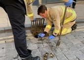 Huy động lính cứu hỏa giải cứu bốn chú vịt con rơi xuống cống