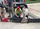 Bố nhanh trí cứu con gái 4 tuổi khỏi cá sấu khổng lồ
