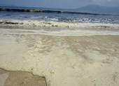 Nước biển Đà Nẵng có màu vàng hôi là do tảo