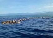 Phát hiện hàng trăm rùa biển quý hiếm chết không rõ nguyên do