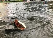 Đà Nẵng: Hàng loạt tuyến đường bị ngập chìm vì ảnh hưởng bão