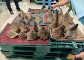 Phát hiện lô sừng tê giác nhập lậu lớn nhất từ trước tới nay