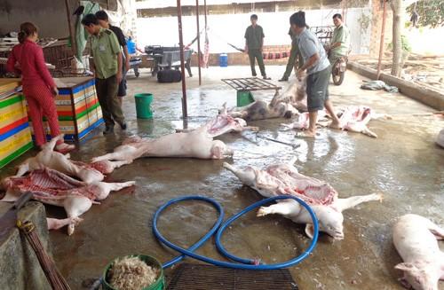 Phát hiện 400 kg thịt heo bốc mùi hôi thối d