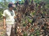 Đoàn ĐBQH tỉnh Đồng Nai giám sát vụ vườn bơ bị hạ độc