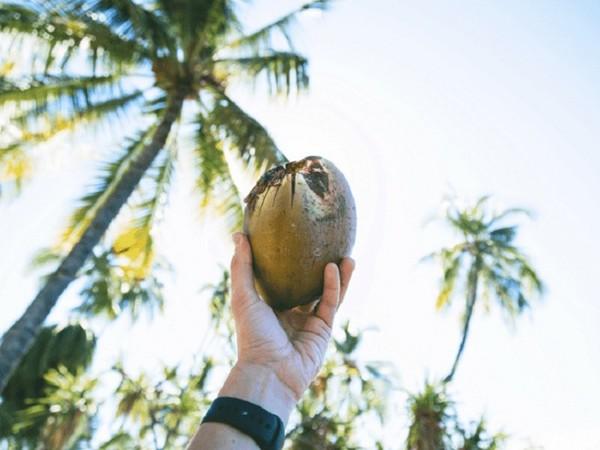Nước dừa có rất nhiều lợi ích tuyệt vời cho sức khỏe, đặc biệt hiệu quả trong việc làm tan sỏi thận.