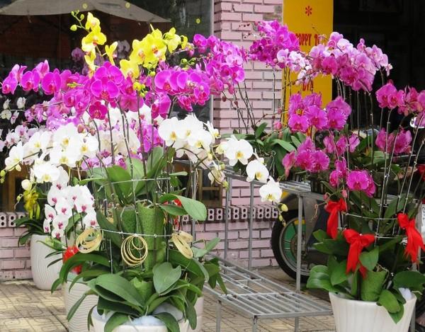 Nhiều năm nay, hoa lan cũng là một trong các mặt hàng hút khách dịp Tết.
