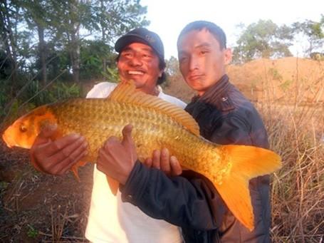 Năm 2012, lần đầu tiên ngư dân ở An Giang bắt được con cá tra dầu nặng 72kg từ sông Hậu.