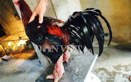 Năm 2013, anh Vũ đã bán một cặp gà